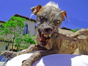Really Ugly Dog